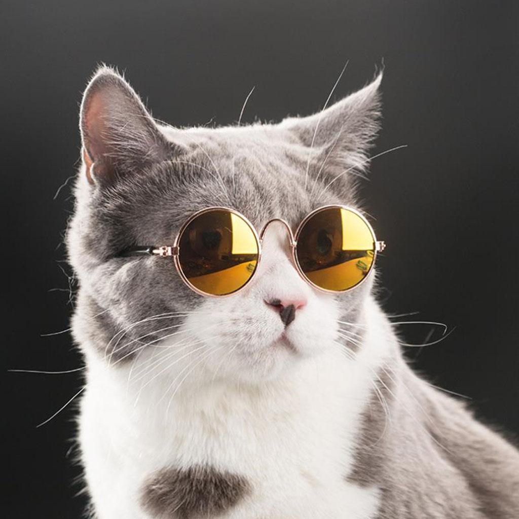 237238e82afdc Óculos de sol Ray Ban Inspired para Cachorro